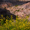 Overlooking The Sweet Clover Into The Canyon - Makoshika State Park, Glendive, Eastern Montana