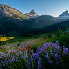 Wildflowers Fill The Meadows Alongside Logans Pass  -  Going To The Sun Road, Glacier National Park, Montana