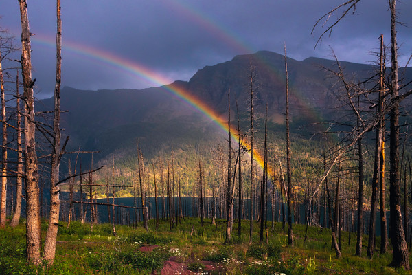 Rainbow Shining Through Trees -  Saint Mary's Lake, Glacier National Park, Montana
