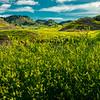 Hilltops Of Sweet Clover - Makoshika State Park, Glendive, Eastern Montana