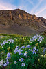 Colorado's State Flowers Valleyside - San Juan Mountains, Colorado