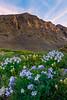 Colorado's State Flowers Valleyside - San Juan Mountains, Colorado