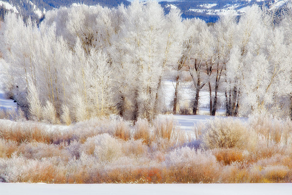 Pastels Of Winter - Grand Teton National Park, Wyoming