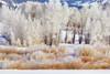 Pastels Of Winter - Grand Teton National Park, Wyoming