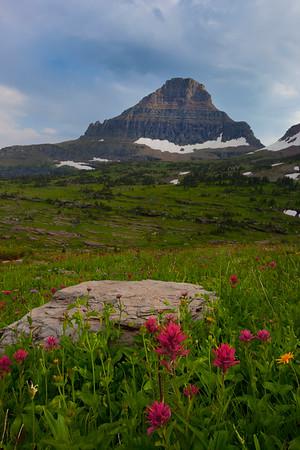 Resting Spot For Wildflowers - Glacier National Park, Montana