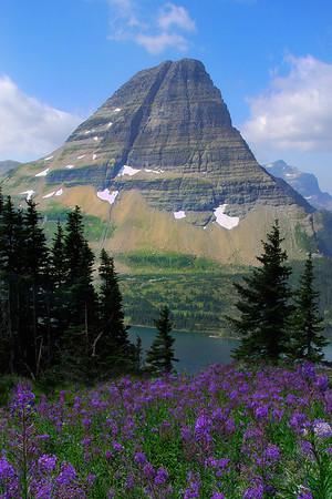 Spring Season Abloom  -  Logan's Pass, Hidden Lake, Glacier National Park, Montana