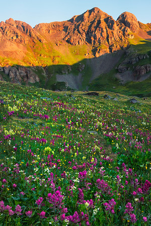 Wildflowers As Far As The Eye Can See - San Juan Mountains, Colorado