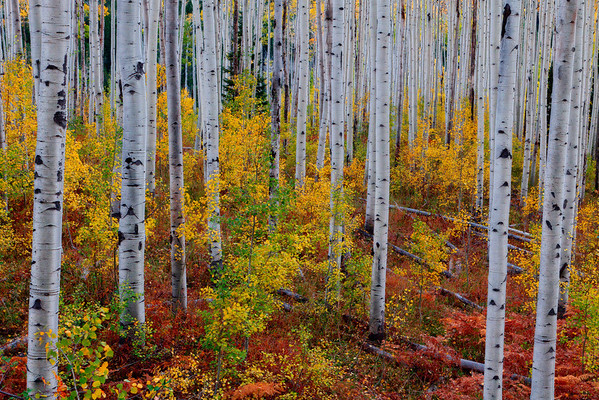 A Mix Of Color - Independence Pass, Colorado