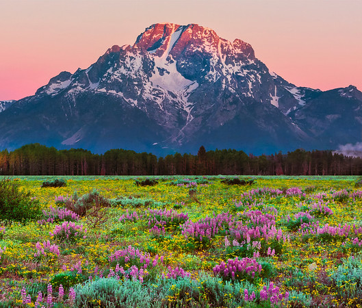 Making A Bold Entrance - Grand Teton National Park, Wyoming St