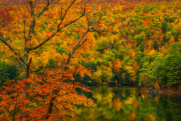 Autumn Abstracts At Emerald Lake State Park - Vermont