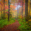 he Trail Into Autumn Mystery - Vermont