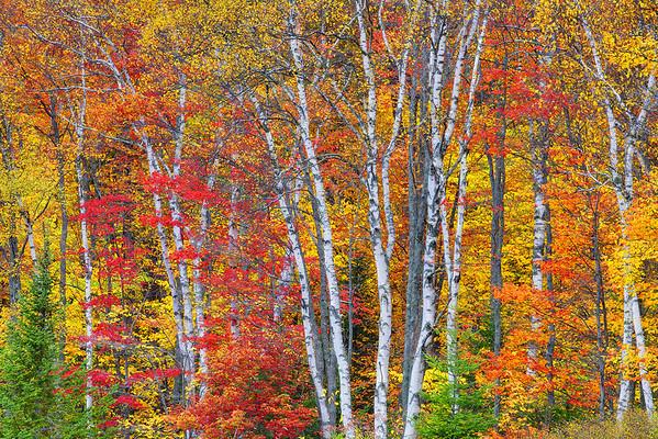 Classic New England Scene  - Vermont