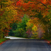 Canopy Of Color  - Vermont
