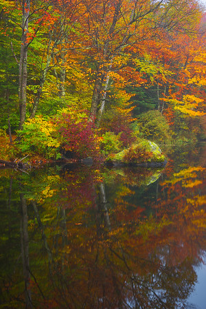 Abstract Look Surrounding Pond - Vermont