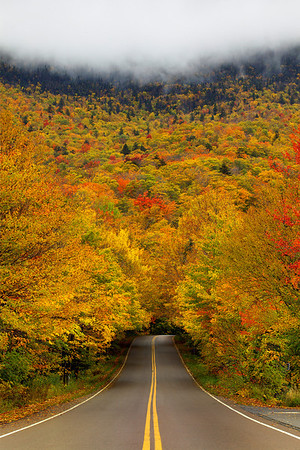 Forests Of Gold - Smuggler's Notch, Vermont
