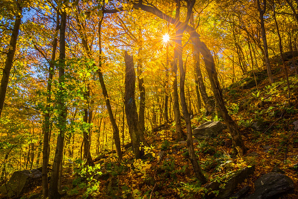 Sunburst Through Smugglers Notch Forest - Vermont