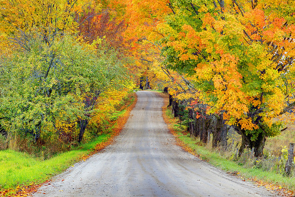 Rollercoaster Through Autumn  - Vermont