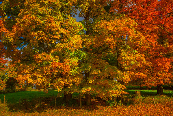 Autumn Foliage At The Base Of It All - Vermont
