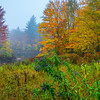 A Mix Of Seasons In Mist - Vermont