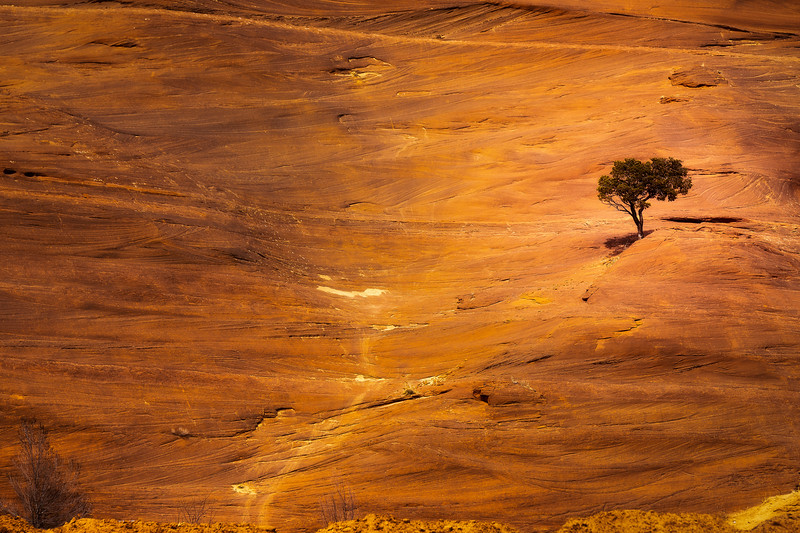 Alone On A Hillside -  Red Rock State Park, Gallup, New Mexico