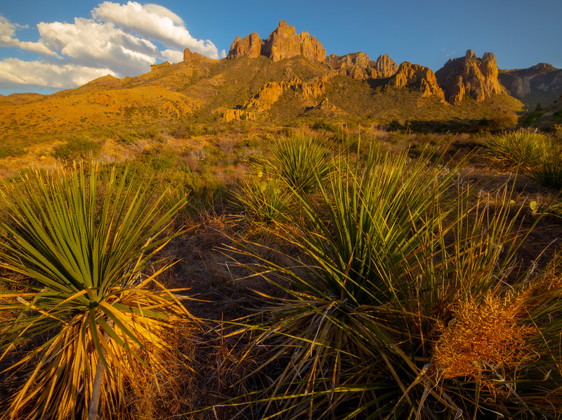 View Of The Chiso Mountains From The Valley - Big Bend National Park, Texas