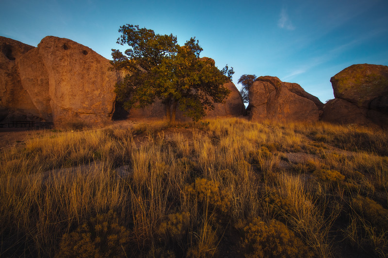 Golden Light Meadow City Of Rocks State Park, New Mexico