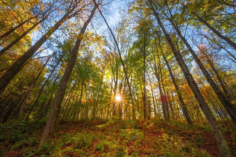 Looking Up At The Falling Trees - - Robert Treman Park, Finger Lakes Region, Upstate NY, NY