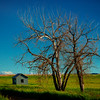 The Bareness Of A Solo Tree - Marmath, North Dakota