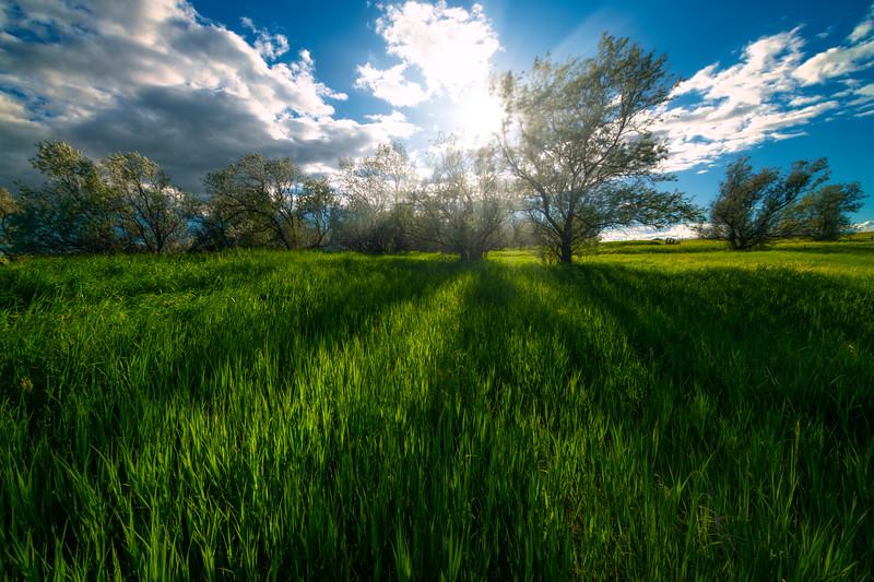 Sun Rays Breaking Through Trees - Rhame, North Dakota