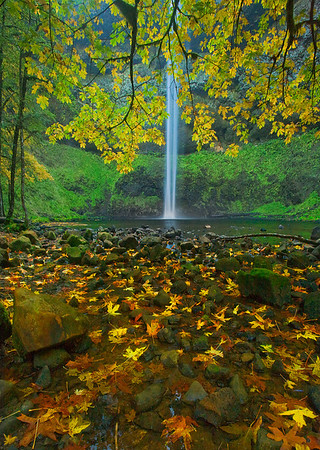 From Below - Silver Falls State Park, Oregon