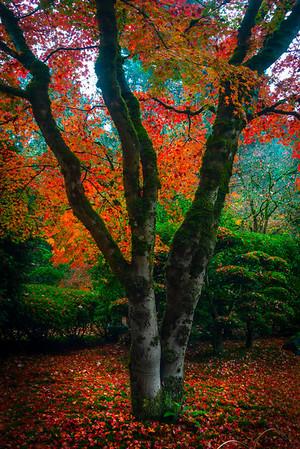 Japanese Gardens, Portland, Oregon_19