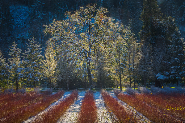 When Late Autumn Meets The First Winter