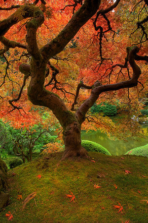 Fall Moments At The Garden -  Portland Japanese Garden, Oregon