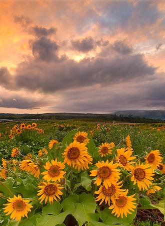 A Mix Of Weather - Rowena Crest, Tom McCall Preserve , Oregon