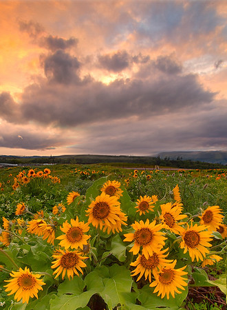 A Mix Of Weather - Rowena Crest, Tom McCall Preserve , Oregon