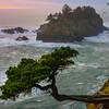Hanging Trees On Cliffs - Samuel Boardman State Park, Southern Oregon Coast