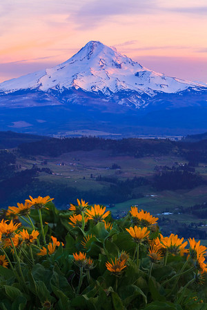 On Top Of Hood Valley - Hood Valley, Columbia Gorge, Oregon St