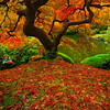 Falling Pieces Of Autumn Color - Portland Japanese Gardens, Oregon St