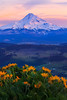 Standing Tall And Proud -Mount Hood, Hood Valley, Columbia Gorge Scenic Area, Oregon