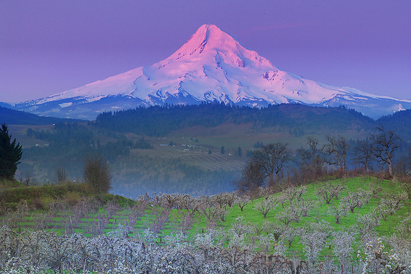 Spring Merges With Alpenglow In Hood Valley - Hood River Valley, Oregon