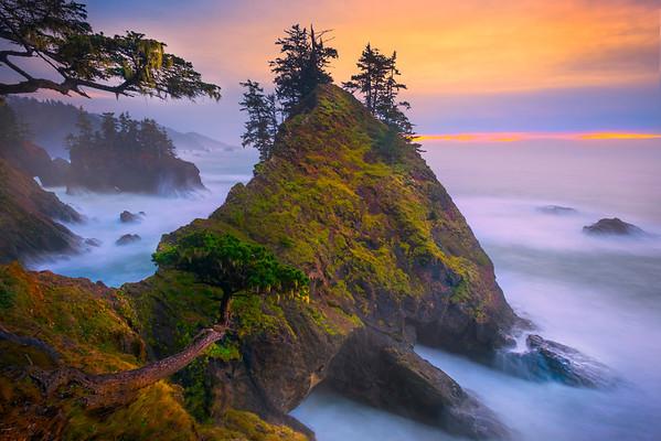 Overhanging Tree And Twilight. - Samuel Boardman State Park, Southern Oregon Coast