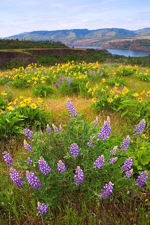 X Marks The Spot - Rowena Plateau, Tom McCall Preserve Area,Oregon