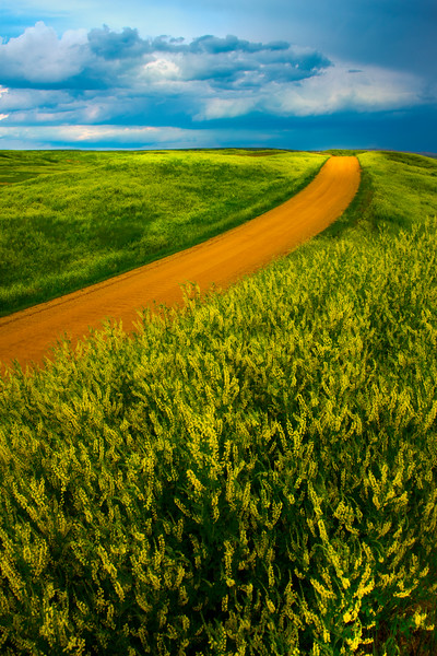The Road Going Through The Yellow - Badlands National Park, South Dakota
