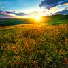 Sweet Clover Delight Sunset