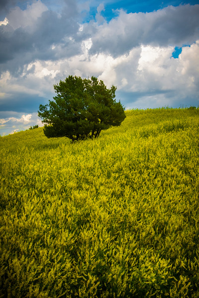 Dreaming Of Nothing But Yellow - Badlands National Park, South Dakota