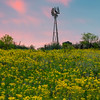 Wind Mill At Sunset in Yellow Field_Vertical