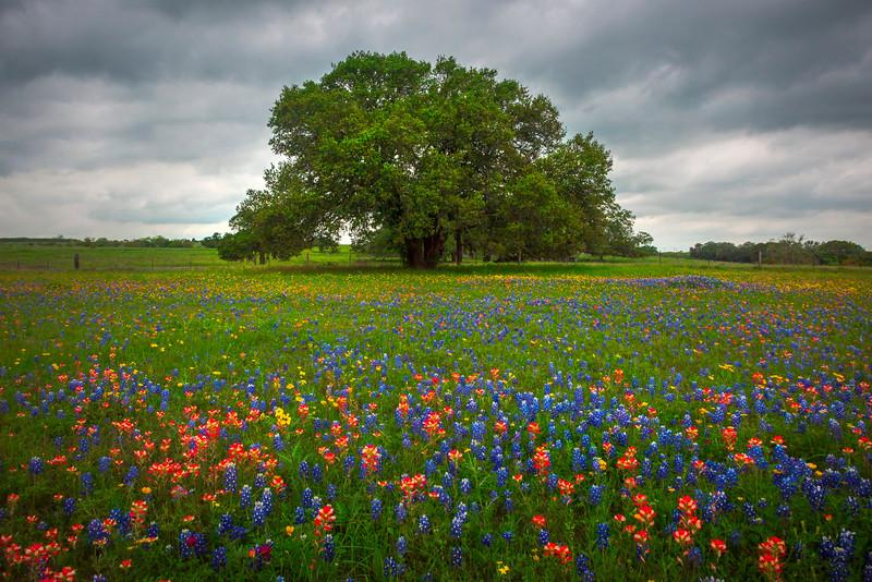 A Meadow Of Color