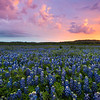 Blue Bonnet Fire Morning