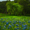 The Green Tree In The Blue Bonnets