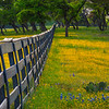 The Yellow Lined Fence Into The Woods